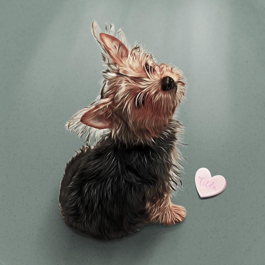 Tilda - Digital drawing of a dog